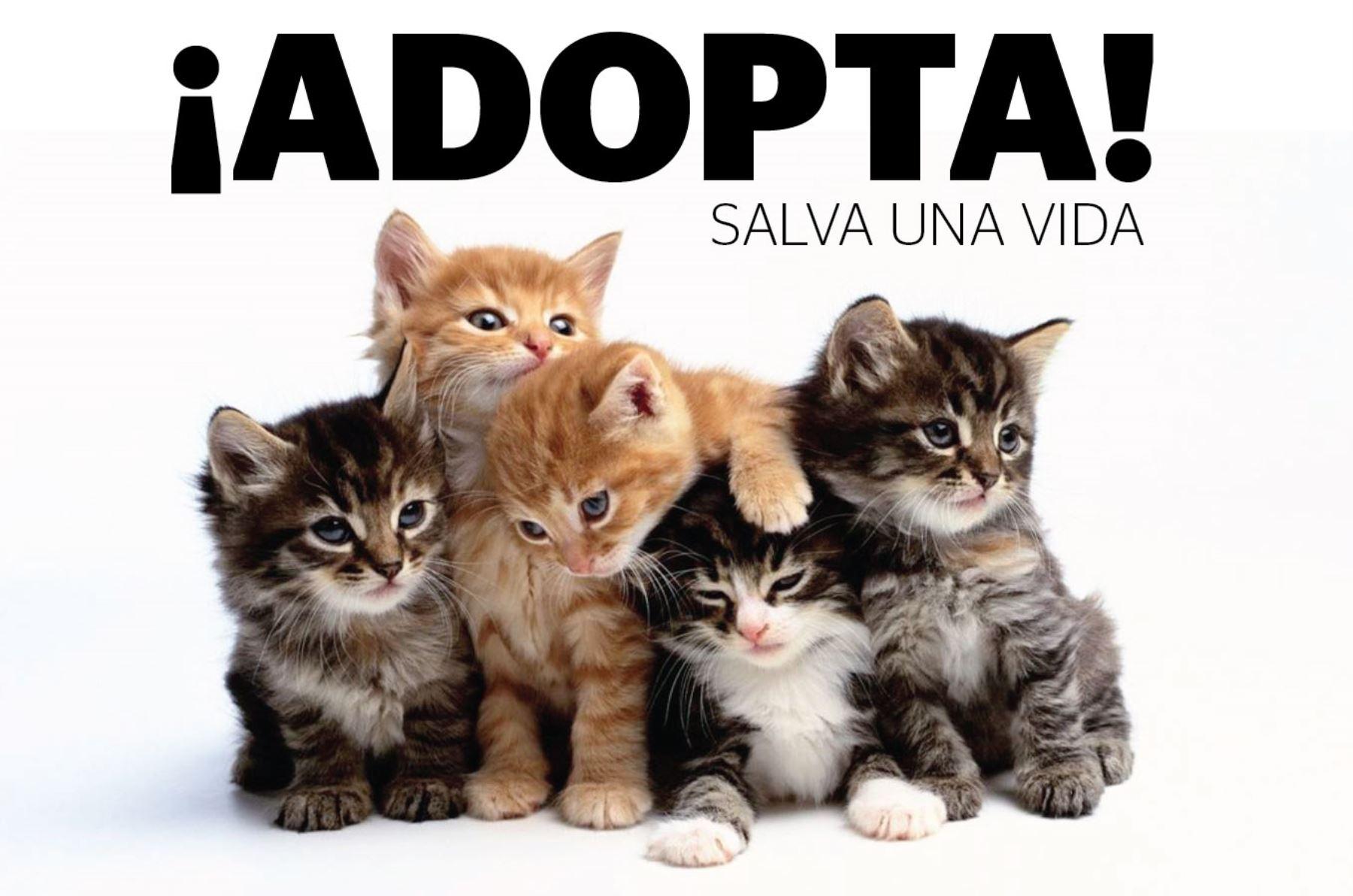 Recopilatorio de accesorios para gatos + BONUS SOLIDARIO (parte 2)
