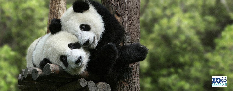 30% de descuento en el Zoo de Madrid para clientes Movistar